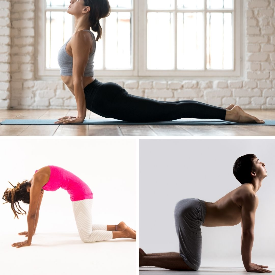 cobra pose, cat pose, cow pose, stretching, strengthening your core